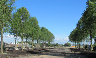 Beautiful tree rows create entrance of The Triangel, Waddinxveen