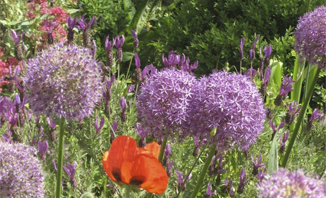 Loos van vliet bloementuin haarlem for Www bloem en tuin nl